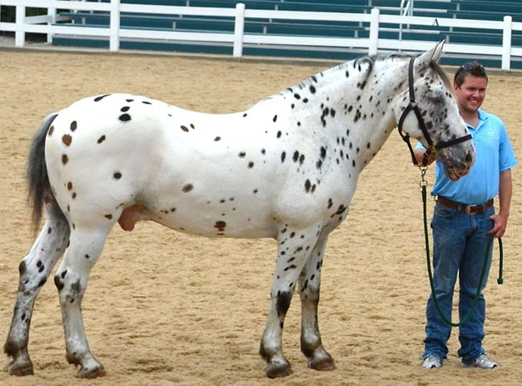36 best farmville 2 animals in real life images on for Farmville horse