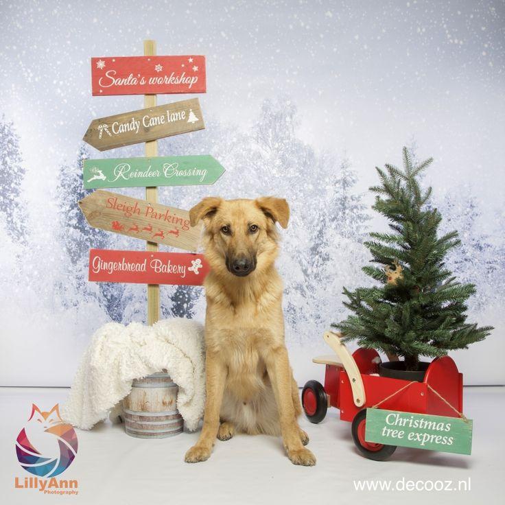 Kerstbord, Kerstwegwijzer, kerstpaal, kerst wegwijspaal, kerstversiering, kerstmis2017, kerstfotoshoot, kerstdecoratie, hondenfotoshoot, dierenfotoshoot
