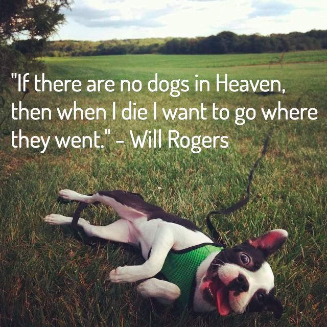 13 Dog Loss Quotes: Comforting Words When Losing a Friend
