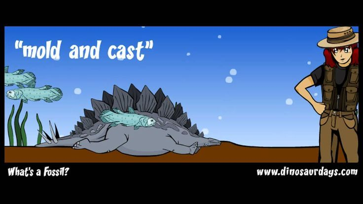 WHAT ARE FOSSILS?  A video that describes what and how the different types of fossils are formed. It provided a little more insight to how and why fossils are found when rock containing the fossils are pushed upwards and weathering exposes the fossil. It is a brief video that may be used to introduce the topic of fossils.  Content and Teaching Strategy