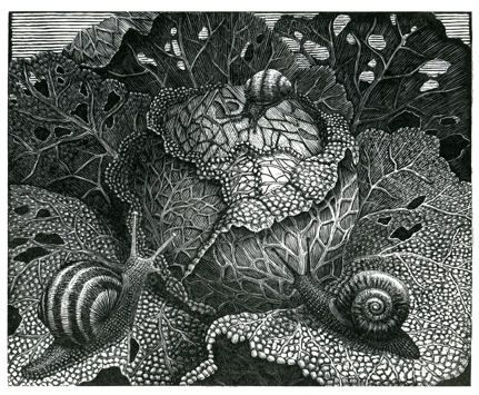 Geri Waddington. Cabbage. (wood engraving)