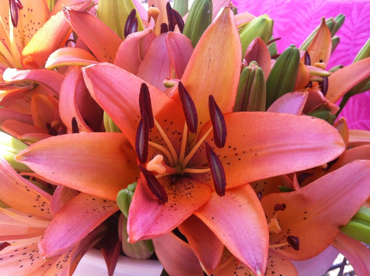 Bright Pink Lily - http://artemisinthecity.com