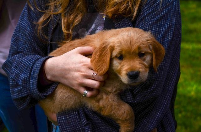 When Can Puppies Go Outside Guide To Walking Puppies In 2020 Dog Clothes Puppies Dogs
