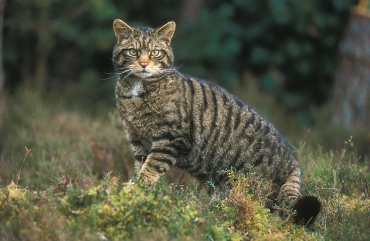 The Wild Kingdom - 10 Fascinating Animals Native to Great Britain