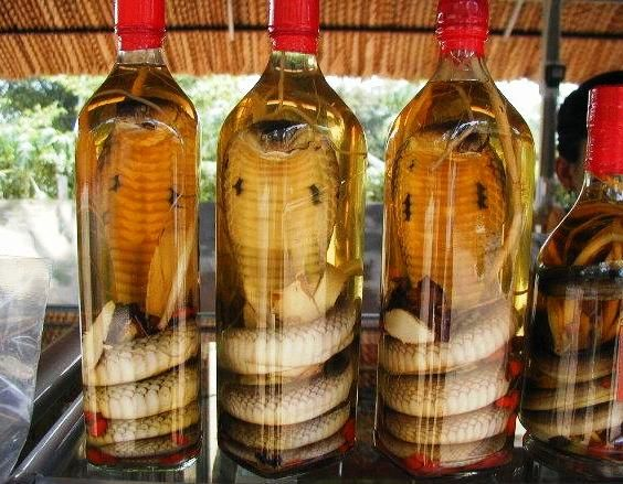 Snake preserved in wine for 3 months jumps out bites woman aaaaah #horror #wine