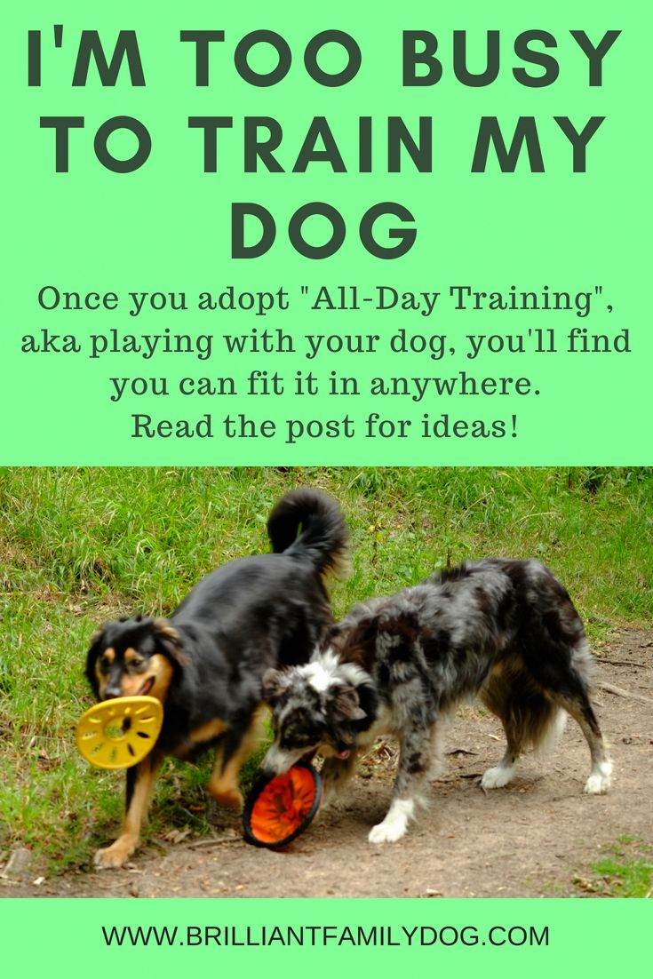Teach your dog everything you want him to learn, one
