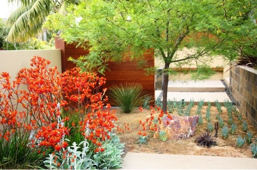 Created by Debora Carl landscape Design, this low maintenance and water wise garden is absolutely fantastic! Read more; www.jardins-sans-secret.com/designers/a-fabulous-yard-debora-carl-landscape-design/