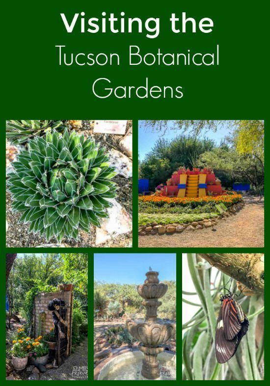 A visit to the Tucson Botanical Gardens, a beautiful garden (with butterfly enclosure) that is family-friendly and perfect for a morning or afternoon visit