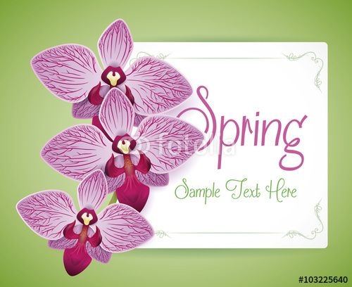 Three Beauty Purple Orchids over a Seasonal Card