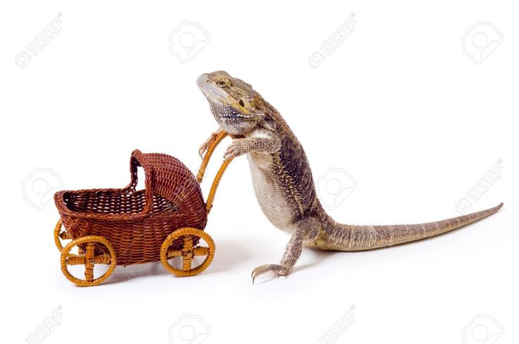 how to make a baby bearded dragon cage