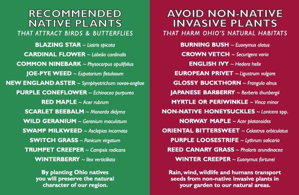 Recommended Natives and Invasives to avoid