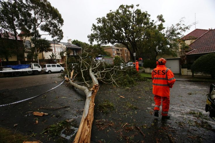 SES workers clearing up a tree down in Flood st, Bellevue Hill.