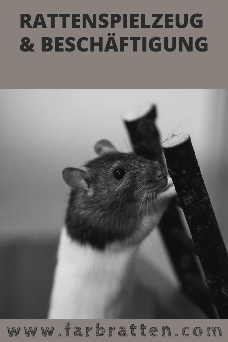 Rattenspielzeug und Beschäftigung: 🐭 Was Du wissen musst – Tipps