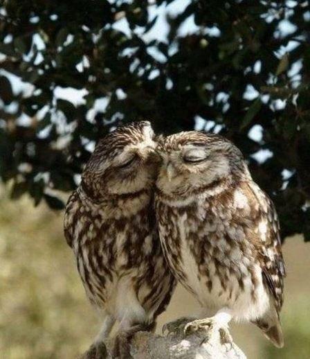 So sweet. Owl love.