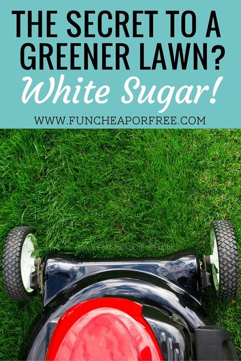 How to use sugar on your lawn as an inexpensive fertilizer! (It's cheap and it WORKS!) www.FunCheapOrFre...
