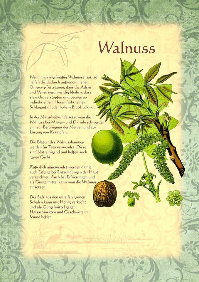 Walnuss                                                                                                                                                                                 Mehr
