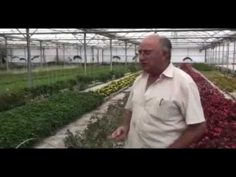 ▶ Stevia, marihuana, jabuco, epilobium... Plantas Prohibidas que Curan por Josep Pamies - YouTube