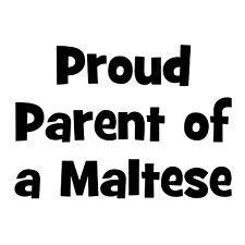 Proud parent of a maltese