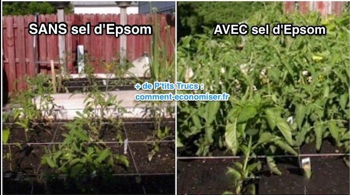 Connaissez-vous le sel d'Epsom, aussi appelé sulfate de magnésium ? C'est un produit méconnu utilisé depuis des centaines d'années. Le sel d'Epsom a de nombreux bienfaits sur la santé mais ...