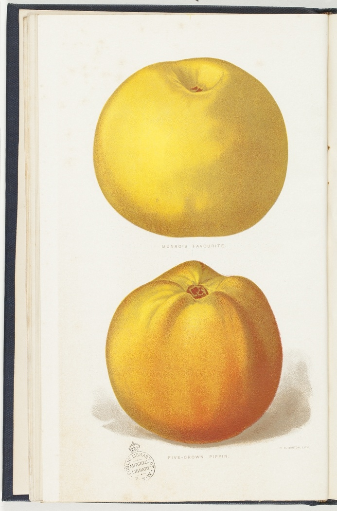 Commercial fruits of New South Wales : Apples, by W.J. Allen. Sydney, 1906.   http://www.sl.nsw.gov.au/discover_collections/history_nation/agriculture/produce/juicy