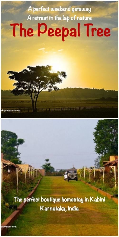 The Peepal Tree , Kabini | Karnataka | India | A perfect weekend getaway from Bangalore | An endeavor with nature and wildlife