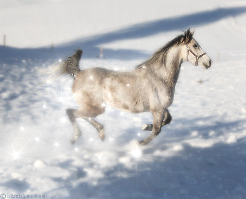 Winter Magic Horse by Bamblerose, via Flickr