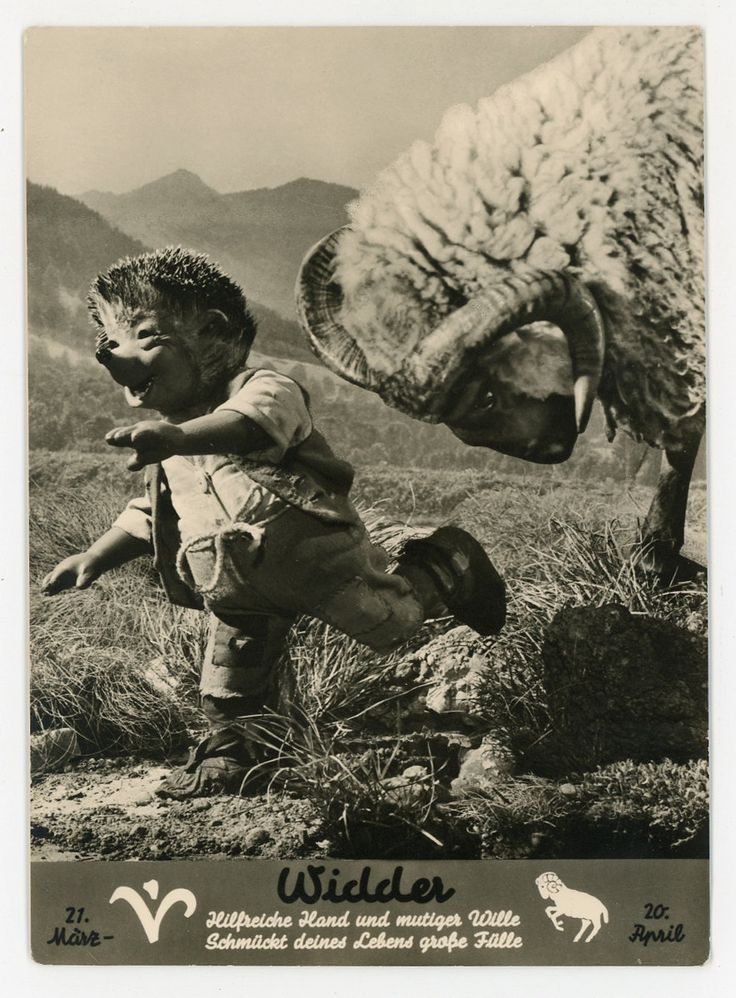Mecki hedgehog horoscope Real Photo Postcard - RPPC - Verlag August Gunkel - Hörzu- Ram Widder - by GRAINSofBrussels on Etsy