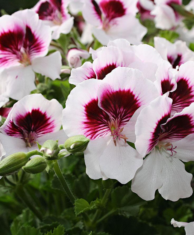 250 best Blumen & Kräuter images by Humsel Brumsel on Pinterest ...