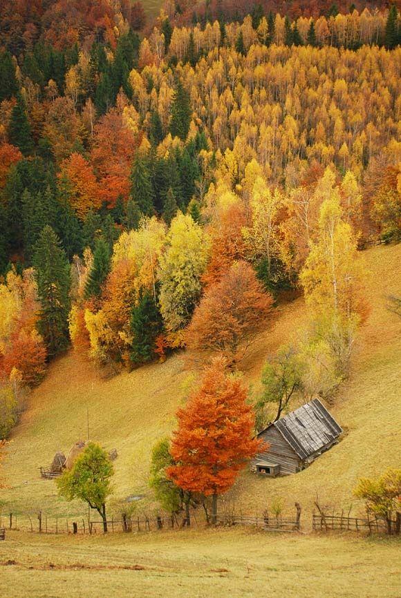 ..Fall