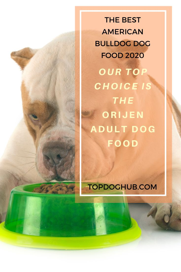American bulldogs dog food dog food recipes american