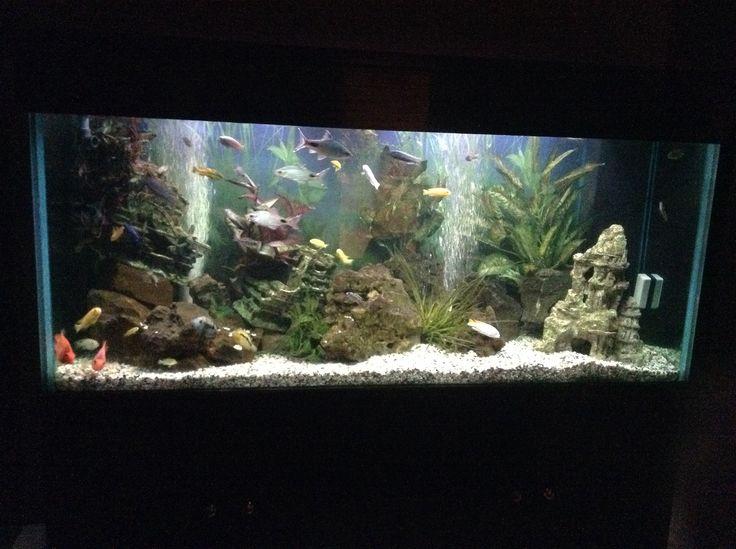 My 1000 liter malawi fish tank. FISH TANK Pinterest