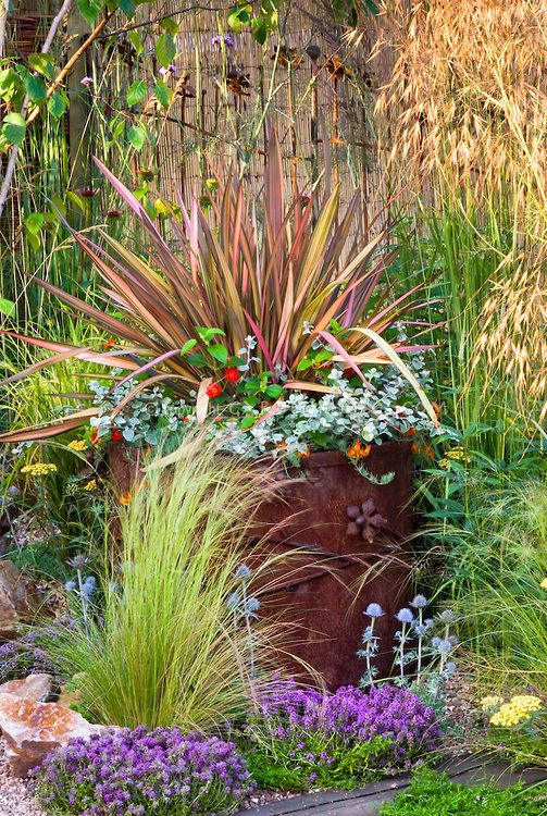 17 best images about summer containers on pinterest for Spiky ornamental grass