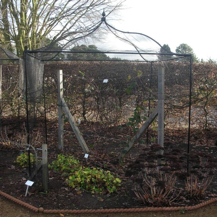 Gothic Roof Fruit Cage Agriframes Fruit Cage Garden Arches