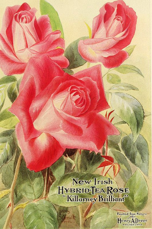 17 Best 1000 images about Antique seed catalogues one of my many