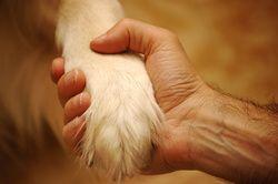 Vous communiquez avec votre chien grâce à un mode verbal et aussi non verbal (gestes, sourires, positions). Les deux doivent être en harmonie. Entraînez-vous à utiliser votre corps, vos bras, etc. Si le chien ne vous écoute pas et n'obéit ...