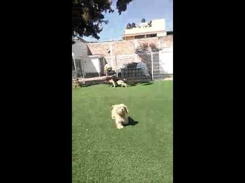 Inteligencia Canina Plantel Tecamachalco