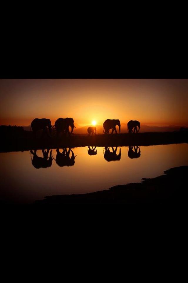 Reflecting Elephants