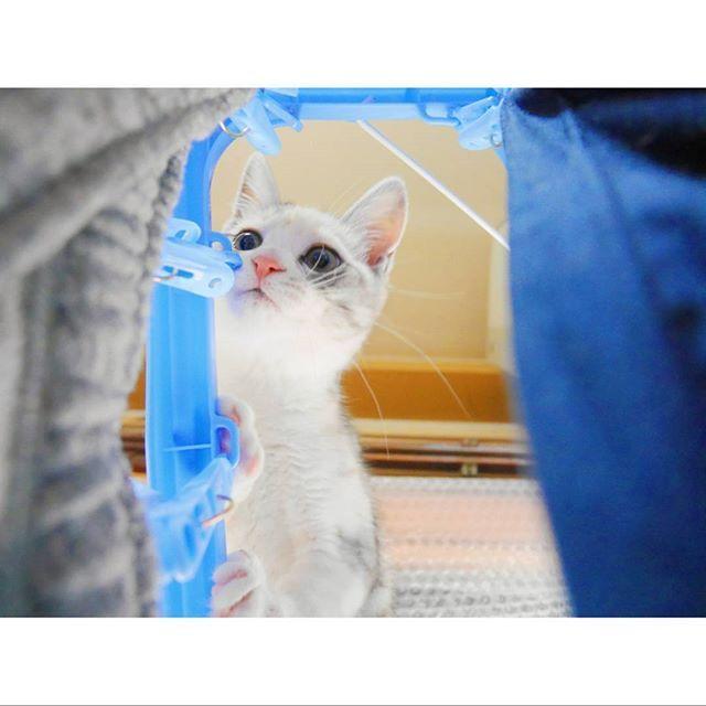 どんな君でも アイシテイル 顔を上げてごらん 光が照らす 涙の河も 海へと帰る 誰の心も 雨のち晴レルヤ  ゆず*雨のち晴レルヤ  梅雨の今、聞くと元気が出る曲🐸☔ 雨だとちょっぴりテンション下がるけど 好きな柄とか色の傘があれば 少しは楽しい雨になるかな☺  #ミラーレスカメラ#lumixgf7 #愛猫 #三毛猫 #猫好きさんと繋がりたい #写真好きな人と繋がりたい #単焦点レンズ #雨の日 #梅雨 #猫 #cute #love #cat