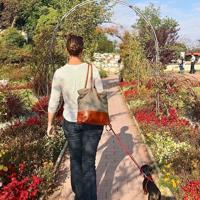 So pretty! Walks on the Schlossberg in Graz #graz #visitgraz #austria #visitaustria #osterreich #schlossberg #flowers #flowergarden #walkies #dogsofinsta #dachshund #dachshundlove #dogwalk #europetrip #europetravel #travelblogger #petblogger