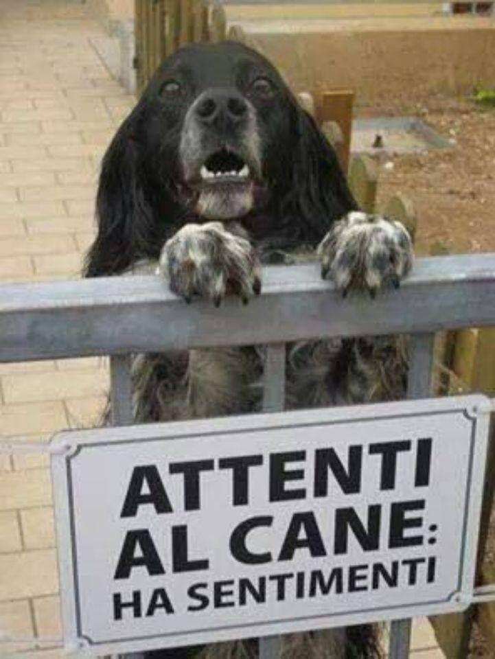 attenti al cane