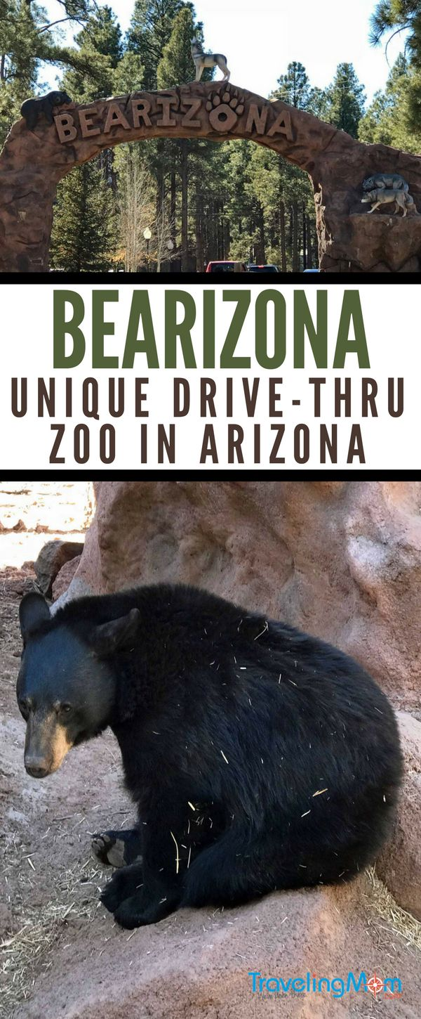 Heading to the Grand Canyon with kids? Don't miss an awesome Arizona road trip detour and tips for visiting Bearizona Wildlife Park, a drive-thru zoo in Northern Arizona near Flagstaff and Sedona.