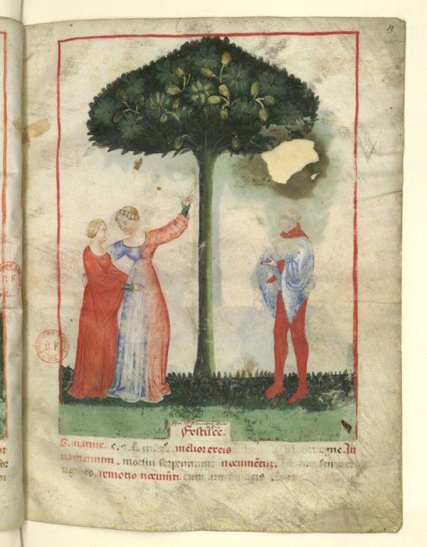Nouvelle acquisition latine 1673, fol. 19, Récolte des pistaches. Tacuinum sanitatis, Milano or Pavie (Italy), 1390-1400.  Keywords: miparti