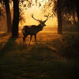 Beautiful deer in the forest with amazing lights at morning in October. View my gallery for more beautiful nature photos.