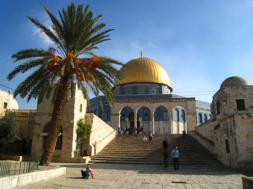 Dome of the Rock & Palm - Find the latest Israel cartoons and the latest news on Israel and the Middle East at http://www.israelnewsreport.net/israel_pics/dome-of-the-rock-palm/