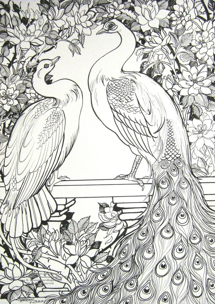 White Peafowl and Roses by HouseofChabrier.deviantart.com on @deviantART