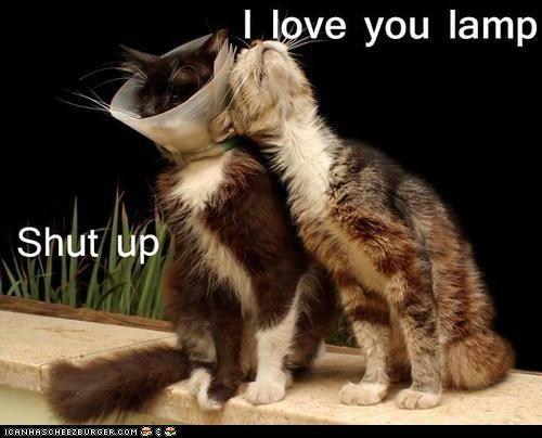 I lubs you lamp.