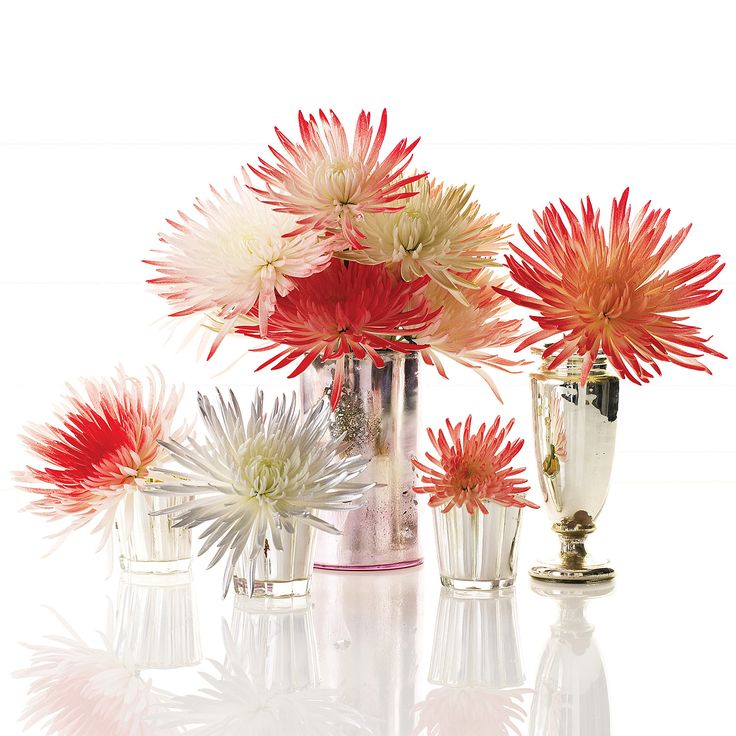Inexpensive and readily available, spider mums can be tinted to look like fireworks. Group blooms of different colors in assorted vessels for a dazzling display.