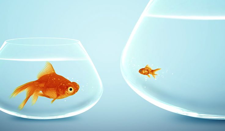 Bigger isn't better: The advantages of being a smaller business