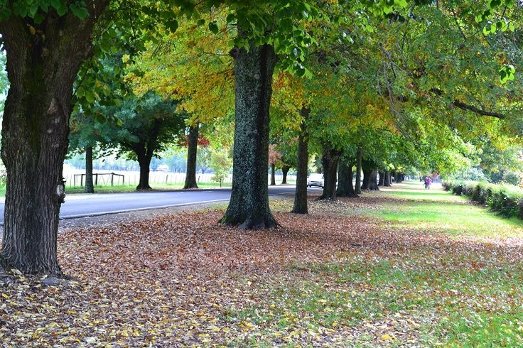 Bright, Victoria's Autumn Capital
