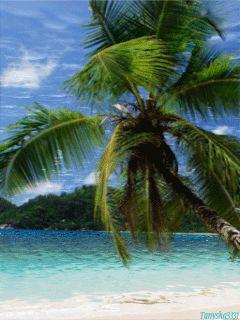 Райский остров - анимация на телефон №851202